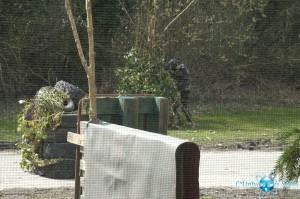 Gameplay 2013 : Paintball